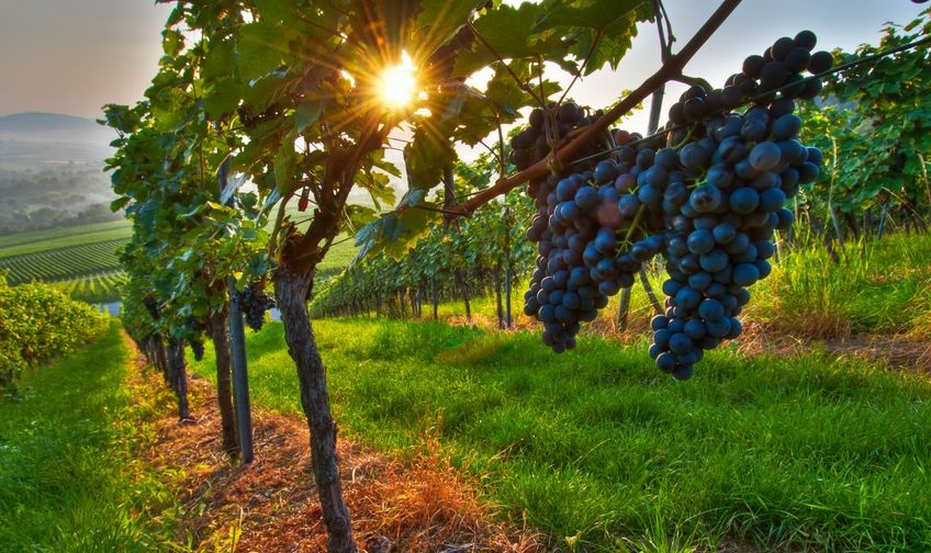 Take a Quick Trip to Westbrook Wine Farm Vineyard and Winery