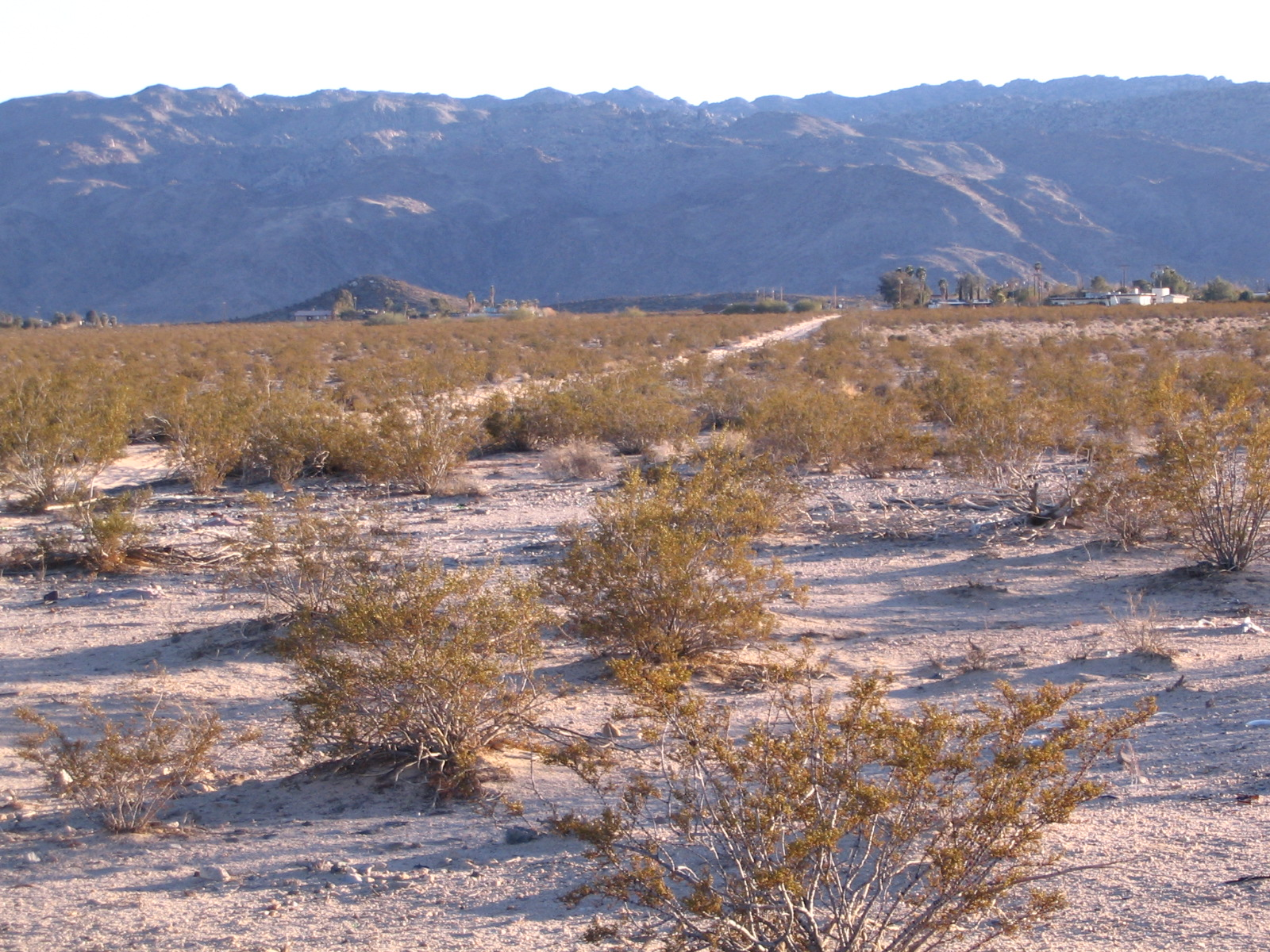 Joshua Tree National Park (in the background) Just 3 Miles From This Parcel!